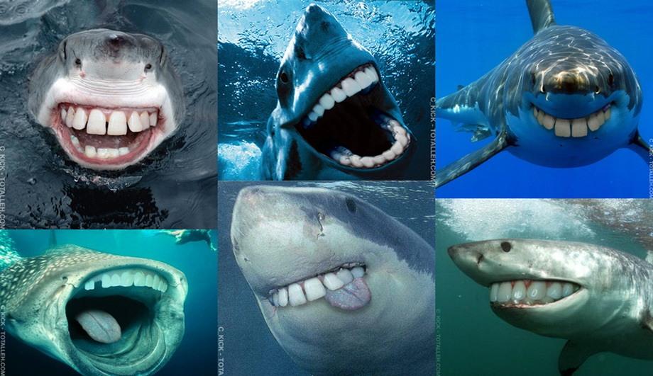 Зубастые акулы - будет смешно