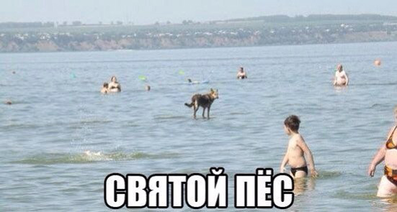 Святой пес