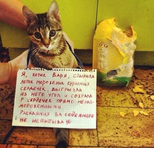 Котик Варя