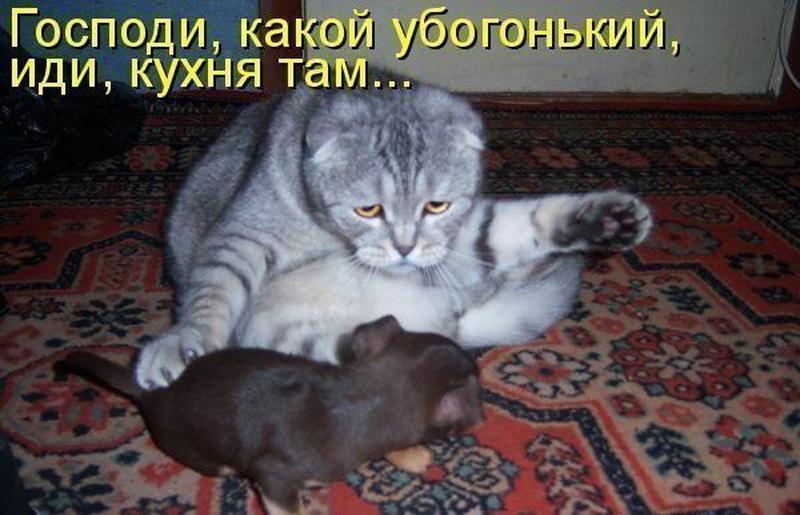 Картинки смешные про котов и собак с надписями смешные до слез, прикольные женские февраля