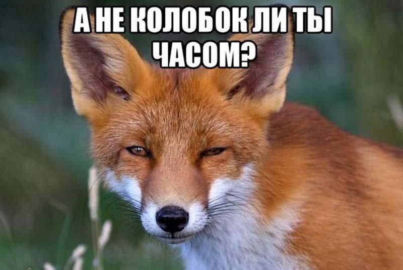 Прикольные картинки про лис с надписями, днем